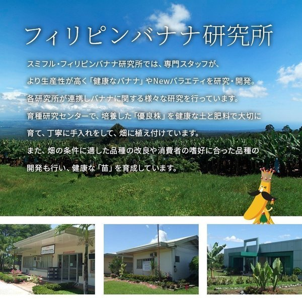 スミフル開発品種 バナナ キウイーナ 3パック 数量限定販売|sumifru|11