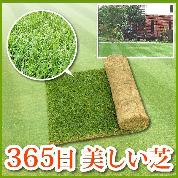 1年中美しい常緑芝を楽しめる三種混合の西洋芝。三種混合ロール巻芝がオススメ