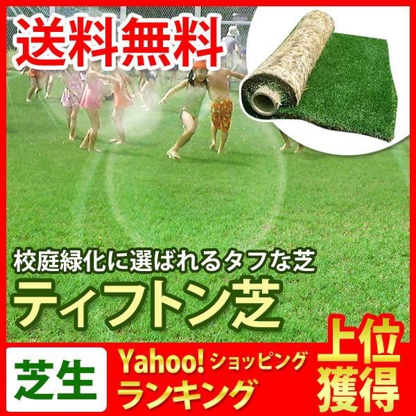 芝生 天然芝 ティフトン芝 ロール巻芝 (芝生 通販)|sun-wa