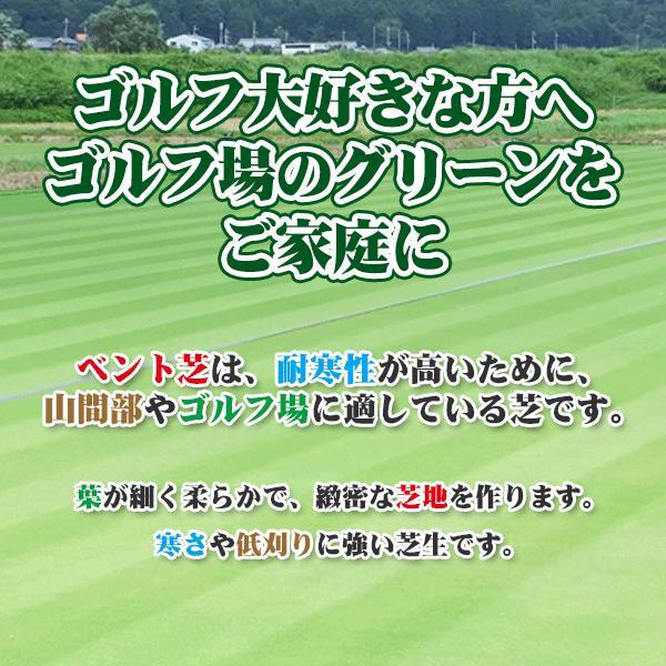 【7/21までポイント最大24倍!】芝生 天然芝 ベント芝 ロール巻芝 (芝生 通販)|sun-wa|03