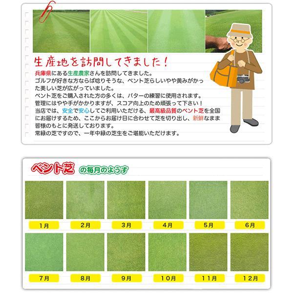 【7/21までポイント最大24倍!】芝生 天然芝 ベント芝 ロール巻芝 (芝生 通販)|sun-wa|06