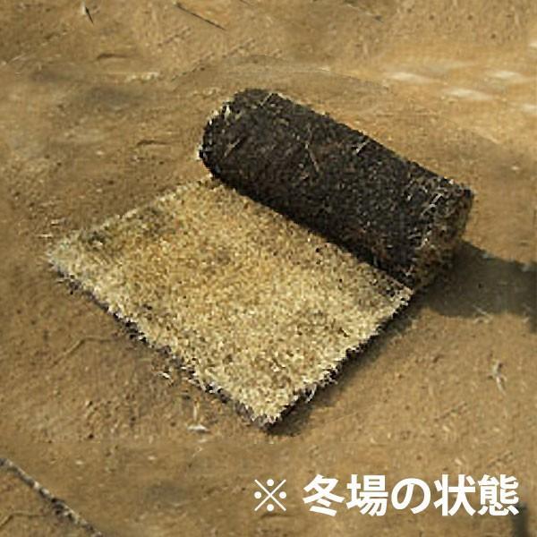 芝生 天然芝 姫高麗芝(ヒメコウライ芝) ロール巻芝 (芝生 通販) sun-wa 02