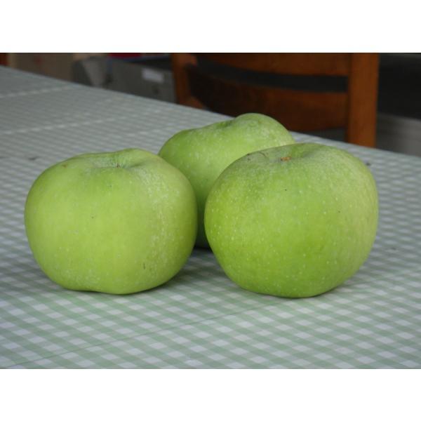 ブラムリーズ・シードリング 1kg|sunfarm