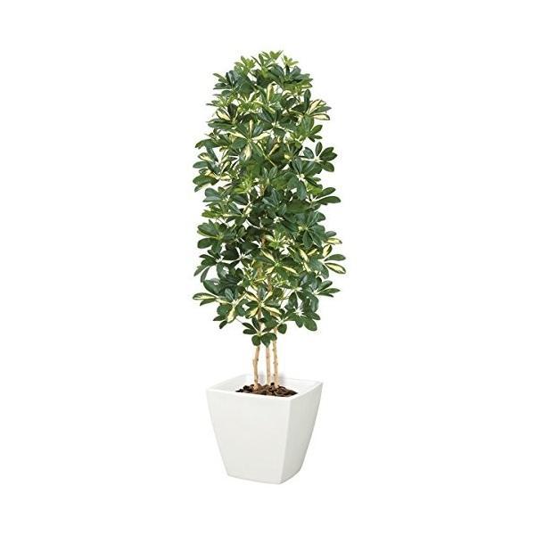 カポックツリー(M)(ナチュラルトランク)(グリーンクリーム)《ポット別売り》(NGT2029MGRCR)フェイクグリーン リーフ 天然木