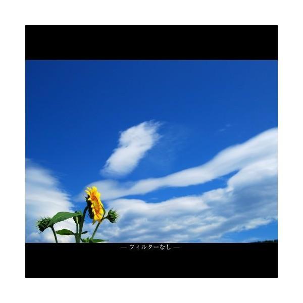 MARUMI カメラ用 フィルター MC C-PL67mm 偏光フィルター 52115