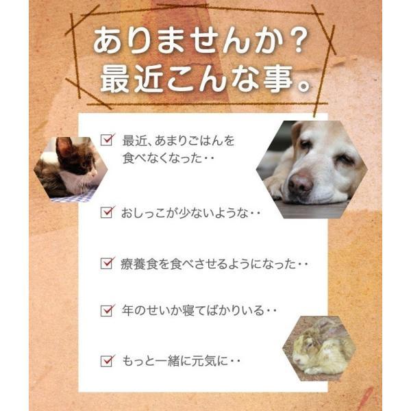 容器がプラに!お得な3本セット 犬猫用水素発生魔法のスティックペット用 水素水 犬 猫 ペット健康 水  supplemarche 12