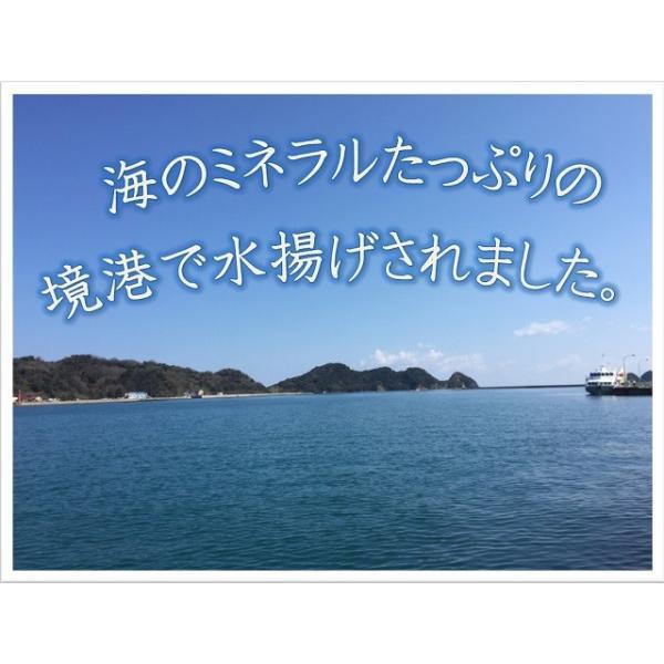 鳥取県産境港 あじ煮干200g|suyamashouten|05