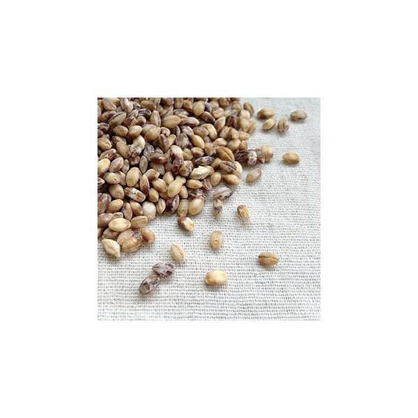 もち麦 ダイシモチ 500g 2019年 国産 徳島県