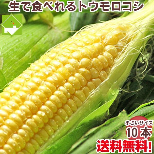 とうもろこし 生で食べられるフルーツトウモロコシ 北海道ふらの産 恵味 Lサイズ 10本 送料無料 別途送料が加算される地域あり