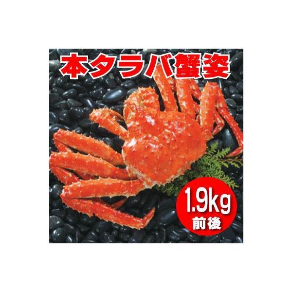 特大 本タラバ蟹姿 1.9kg前後×1尾 《浜ゆで急速冷凍》