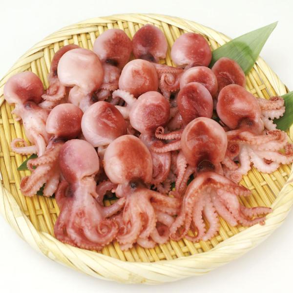 冷凍食品 業務用 ボイルいいだこ (S) 1kg (約50杯入) 10934 弁当 蛸 煮物 たこ ボイル