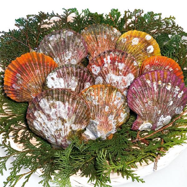 グルメ 冷凍食品 業務用 ヒオウギ貝 約80〜100g×10枚入 23053 販売期間4月末〜8月  貝柱 うま味 色鮮やか 貝殻
