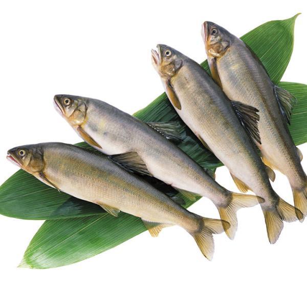 冷凍食品 業務用 冷凍鮎 (1kg11尾 1尾全長約18cm)   お弁当 素焼き 天ぷら 夏 魚