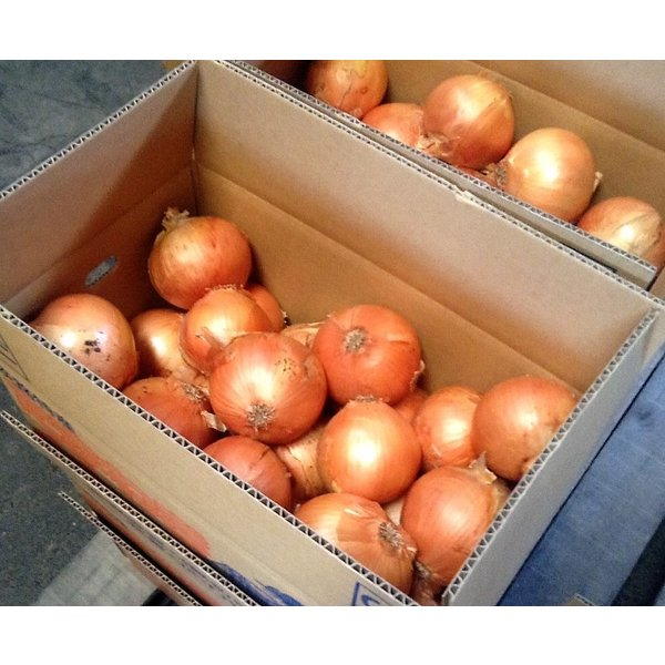 淡路島の新玉ねぎ!絶品色々な料理に万能。日本一の美味しさ。お取り寄せ。2.5キロ  まるごと美味しい!