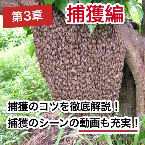 これならできる!ニホンミツバチの週末養蜂【DVD付】|syumatsu-yoho|06