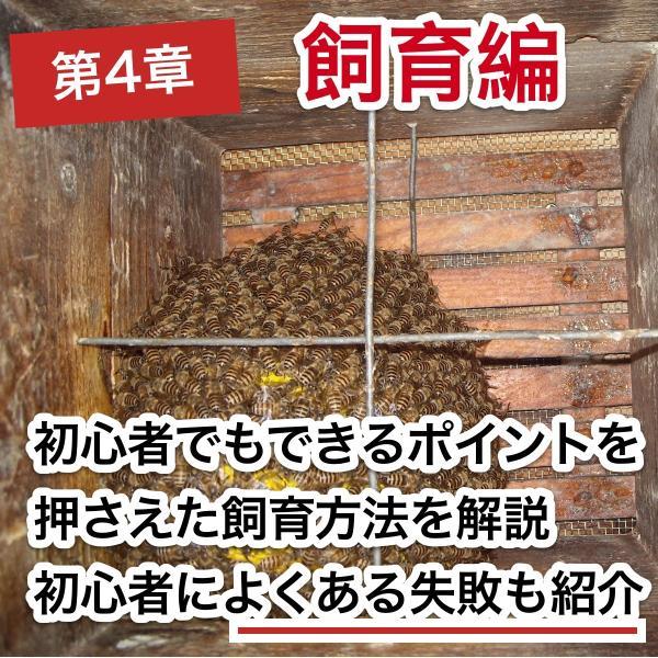 これならできる!ニホンミツバチの週末養蜂【DVD付】|syumatsu-yoho|07