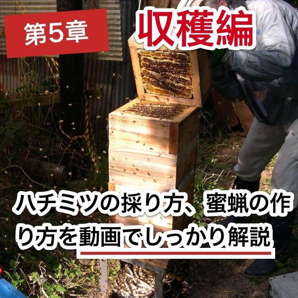 これならできる!ニホンミツバチの週末養蜂【DVD付】|syumatsu-yoho|08