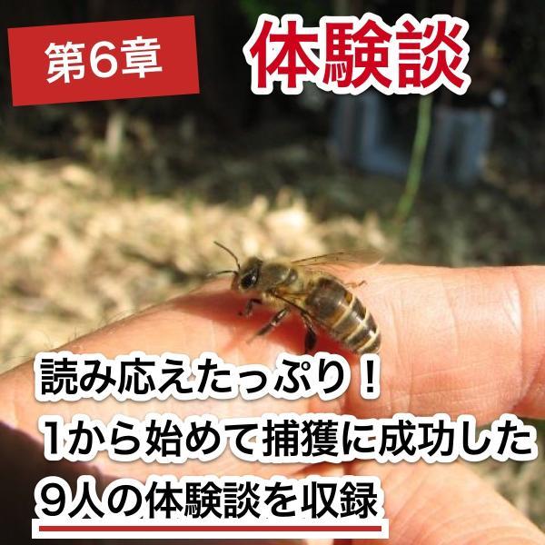 これならできる!ニホンミツバチの週末養蜂【DVD付】|syumatsu-yoho|09
