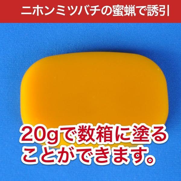 待ち箱ルアーで始める!週末養蜂スタートキット|syumatsu-yoho|05