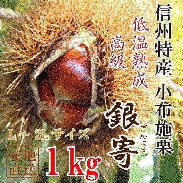 信州産 小布施栗(銀寄)【低温熟成・無薫蒸】1kg(L〜3Lサイズ)