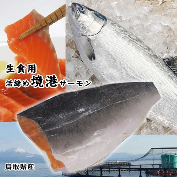 鳥取県産 境港サーモン 銀鮭 フィーレ1枚 400-500g程度 生食用[冷凍]
