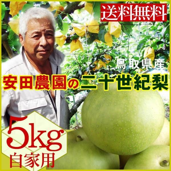 安田農園 二十世紀梨 5kgセット 自家用 13-20玉入り 送料無料 常温 鳥取県産 農家指定商品