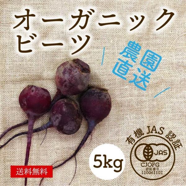 有機ビーツ 5kg オーガニック 有機栽培 有機野菜 野菜 化学肥料・農薬不使用 産地直送 送料無料|syunsaifarm