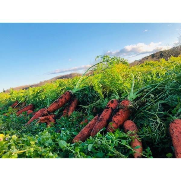 有機野菜詰め合わせ 10種類前後 おまかせ 野菜セット オーガニック 有機栽培 有機野菜 野菜 旬の野菜 産地直送 送料無料|syunsaifarm|02