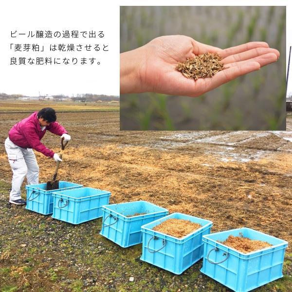 クラフトビール 地ビール 吟米麦酒(ギンマイビール) 吟米WHITE 330ml 新潟産 コシヒカリ tainaibeer 08