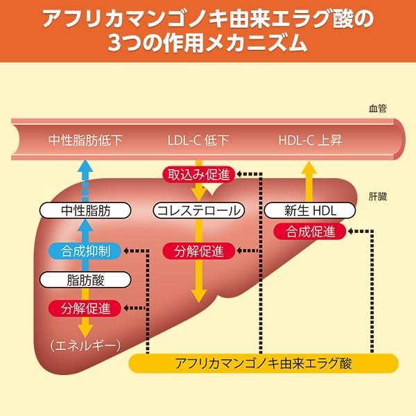 中性脂肪やコレステロールが気になる方のタブレット(粒タイプ)1袋60粒 機能性表示食品 大正製薬|taisho-directshop|05