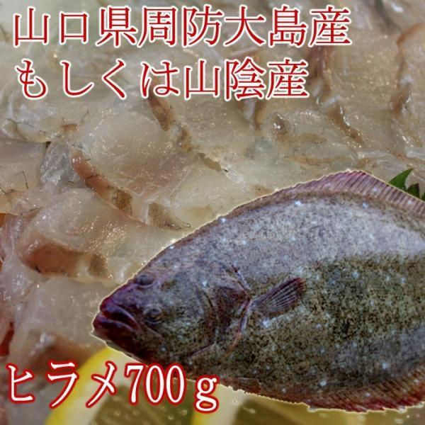 山口県周防大島産、天然ヒラメ700g( ひらめ 平目 )