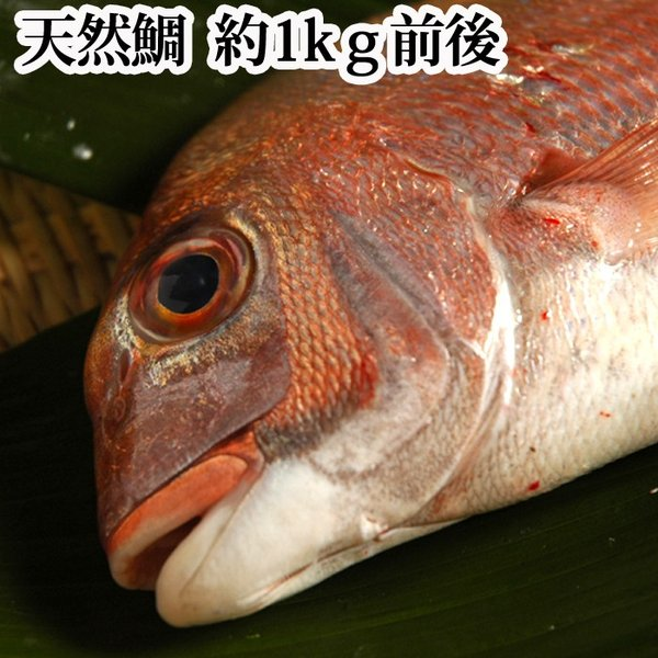 鯛 ( 天然 )瀬戸内海産1kg 地鎮祭に喜ばれているサイズです