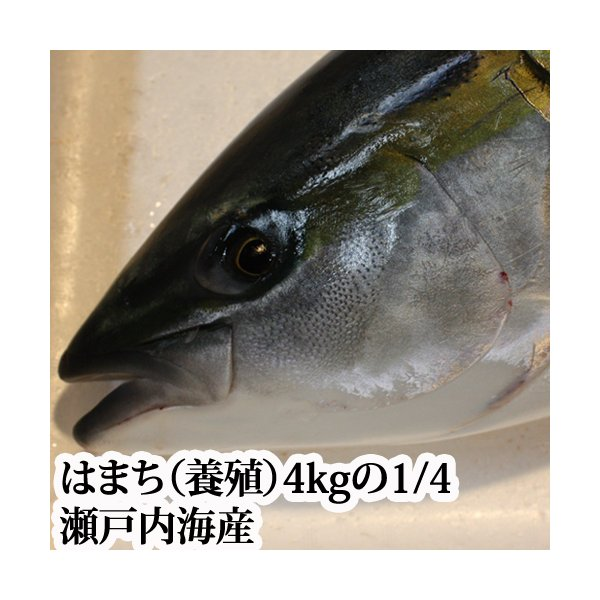 はまち 4kgの4分の1( 養殖 瀬戸内海産 )( ハマチ )
