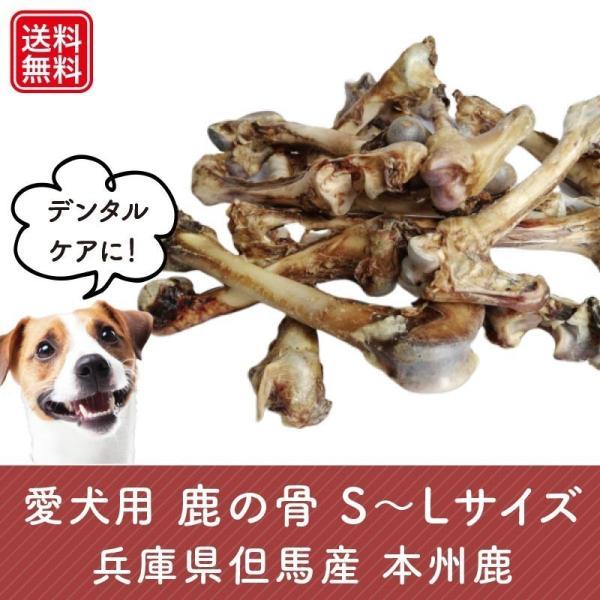 愛犬用鹿の骨 3本パック Mサイズ(長さ15〜22cm・小〜中型犬) 無添加 おいしい鹿肉付き! 兵庫県但馬産本州鹿 tajimart