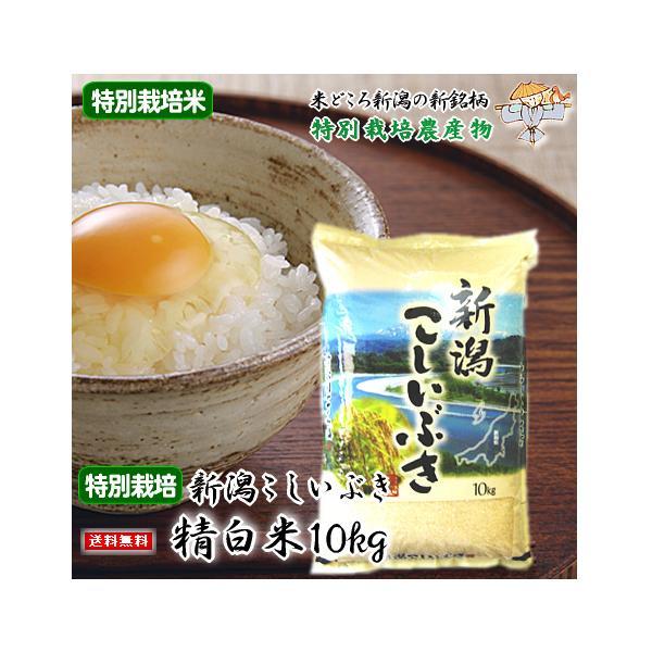 【新米】新潟県産こしいぶき 特別栽培米(令和3年産)10kg 【送料無料(一部地域を除)】