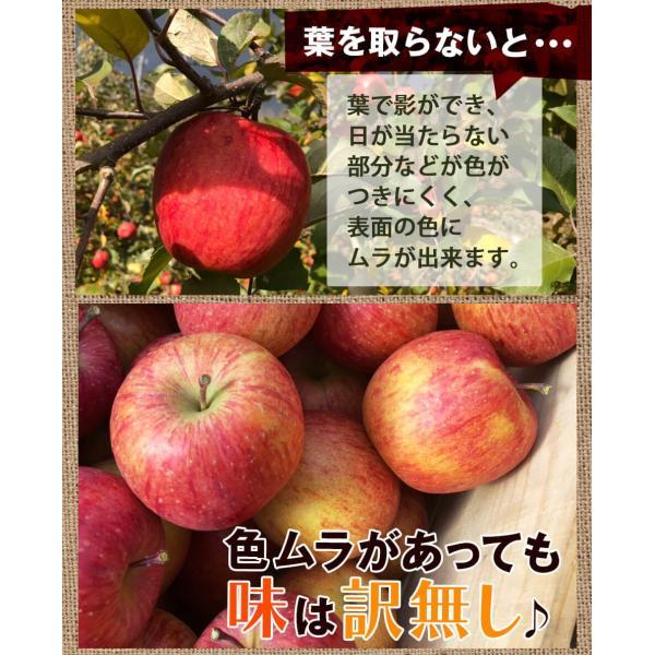 同梱専用 訳あり 葉取らずりんご 青森産 色むら有り サンふじ約2kg(5から8玉前後) 卵と同梱で送料無料 ジュース 蜜入り リンゴ takkotamagomura 04