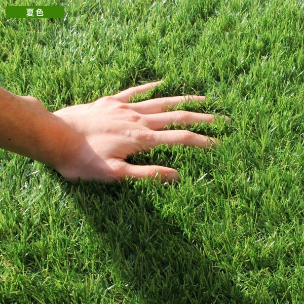 人工芝 ロール リアル人工芝 1m×10m 芝生 ガーデン ガーデニング|tansu|17