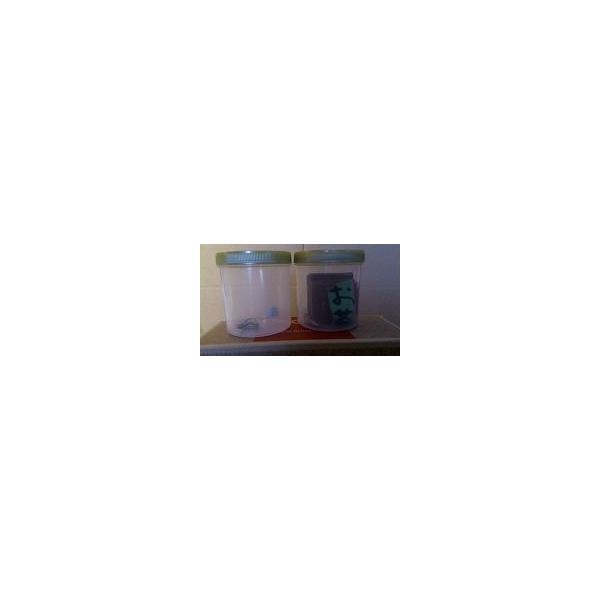 消臭効果抜群!! 伊藤園のお茶殻入り畳 半畳もの新畳(縁付き)|tatamiya3|02