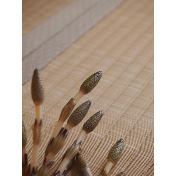 つくしが出たよ♪もう春だ♪ 「土筆色」 1畳もの表替え(縁付き)|tatamiya3|03