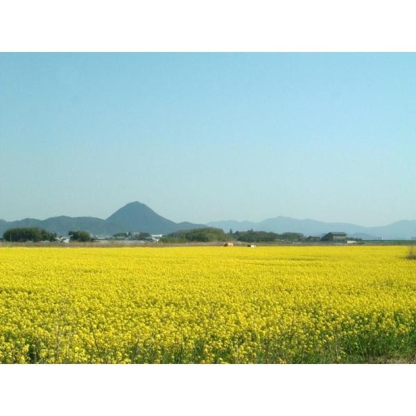 30年産 新米 無農薬米 滋賀県産 コシヒカリ 5kg 有機肥料米 送料無料 玄米 精白米 7分づき 5分づき 3分づき お好みに精米します|tawaraya-kome|04