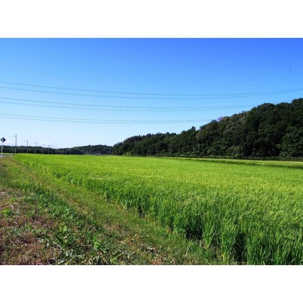 29年産 無農薬米 滋賀県産 コシヒカリ 5kg 無農薬栽培米 送料無料 玄米 白米 7分づき 5分づき 3分づき お好みに精米します|tawaraya-kome|05