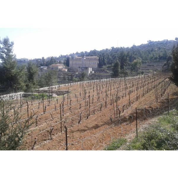 「ベツレヘムの星シリーズ ダボウキ」パレスチナ自治区産 白ワイン 2017年(オーガニック) the-sacred-wine 04