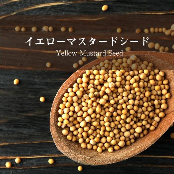 マスタード Mustard マスタードシード スパイス イエロー Yellow Seed(500gパック) ホールスパイス インド食材