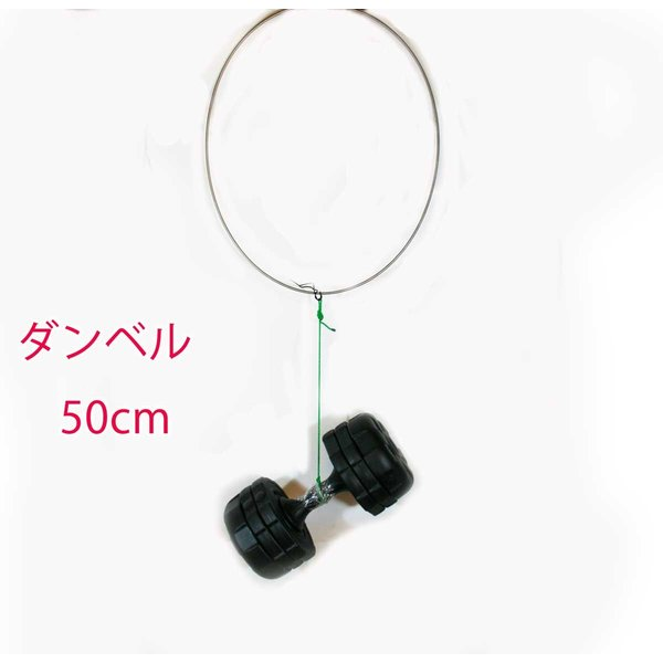 磯タモ 64チタン ワンピース 玉枠 50cm Φ5mm ( ロクヨンチタンフレーム  )
