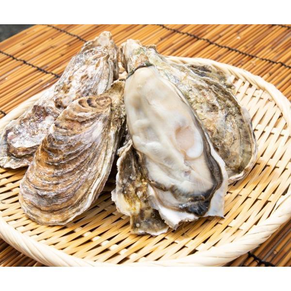 北海道仙鳳趾(せんぽうし)殻付牡蠣 Lサイズ(200g〜249g) 10個入り|tkhs946|02