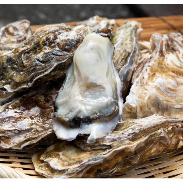北海道仙鳳趾(せんぽうし)殻付牡蠣 Sサイズ(90g〜149g) 30個入り|tkhs946|02