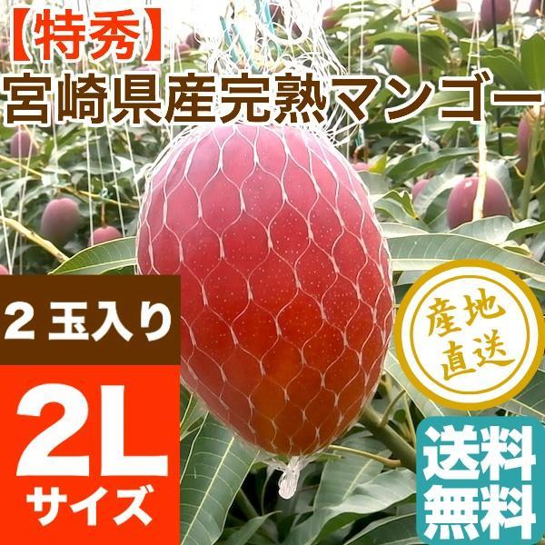 マンゴー フルーツ Fruits 特秀 完熟 宮崎マンゴー 贈答用 2Lサイズ 2玉入り 産地直送 送料無料 フルーツギフト 果物