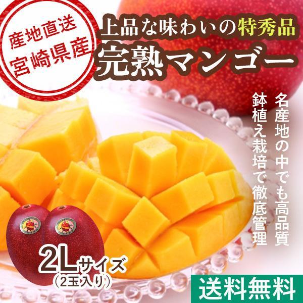マンゴー フルーツ Fruits 御中元 ギフト 特秀 宮崎マンゴー 2Lサイズ 350g以上 贈答用2玉入り 産地直送 送料無料 お中元 果物