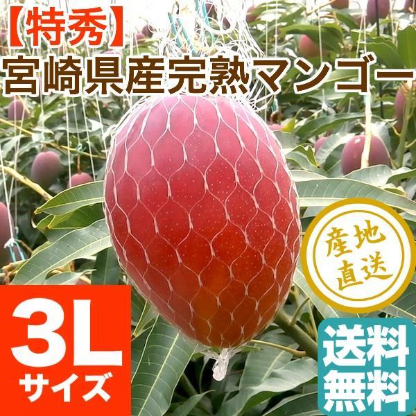 マンゴー フルーツ Fruits 特秀 完熟 宮崎マンゴー 贈答用大玉1玉 3Lサイズ 500g以上 産地直送 送料無料 フルーツギフト 果物