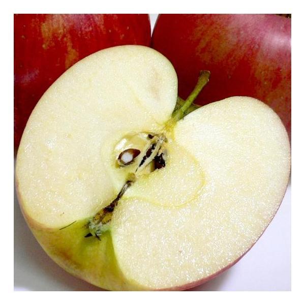 りんご シナノドルチェ 約10kg 中玉 36〜40個入り 長野産|糖度14〜15度|林檎 リンゴ アップルジュース 信州りんご